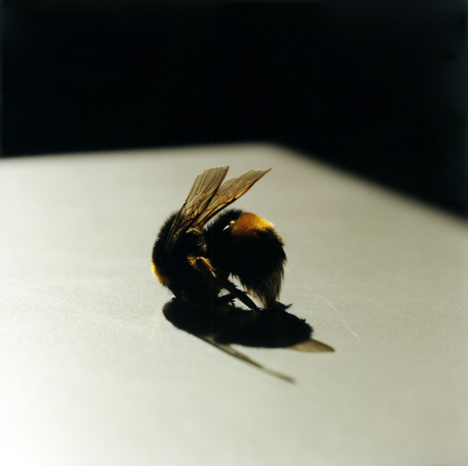 3-bee-from-the-series-still-here